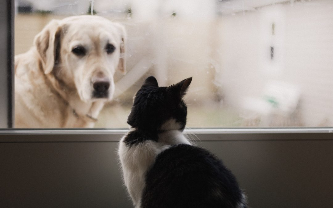Een schoon huis met huisdieren
